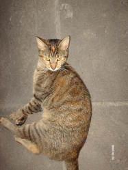 Byzou, chat Gouttière