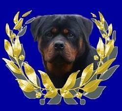 Horacio Du Domaine D'Halliwell, chien Rottweiler
