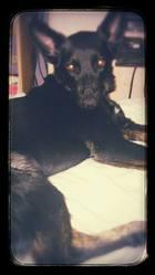 Horia, chien