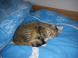 Hortencia, chat Gouttière