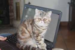 Hortense, chat