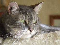 Horus, chat Gouttière