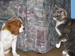Houdinie, chat