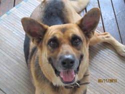 Hugo, chien