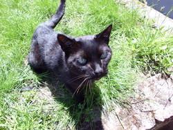 Hugo, chat Gouttière