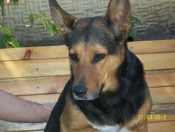 Hulka, chien