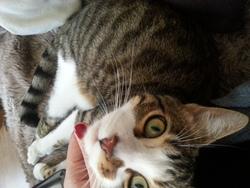 Humphrey, chat Gouttière