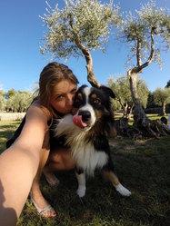 Hunter, chien Berger australien