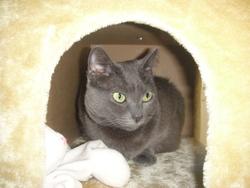 Hureyra, chat Gouttière