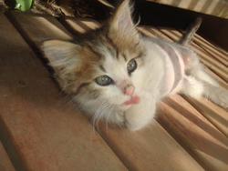 Hurricane, chat Gouttière