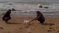 Hysie, chien West Highland White Terrier