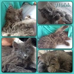 I Melek, chat