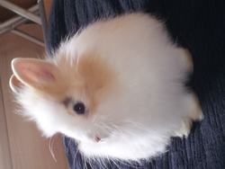 Iam, rongeur Lapin
