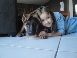 Ica, chien Berger allemand