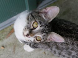 Ice, chat Gouttière