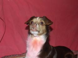 Idélia, chien