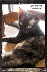 Idylle, chat Devon Rex
