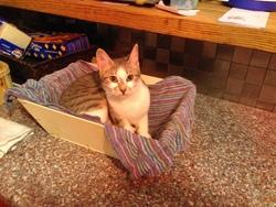 Iggy, chat Gouttière