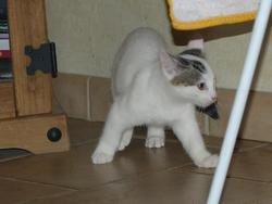 Igor, chat Gouttière