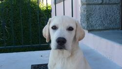 Igor, chien