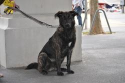 Ike Turner, chien Cão de Castro Laboreiro
