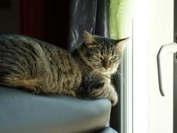 Ilda, chat