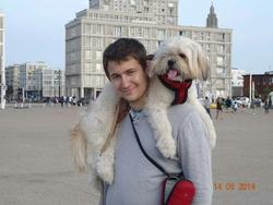 Illico, chien Lhassa Apso