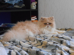 Ilton, chat