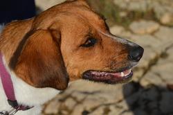 India, chien