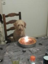 Ines, chien Caniche