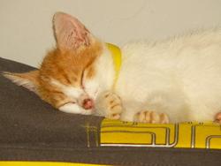 Ines, chat Gouttière