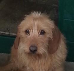 Ines De La Font De L'Arca, chien