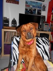 Inka, chien