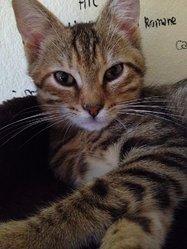 Inouk, chat Gouttière