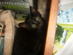 Ira, chat Gouttière