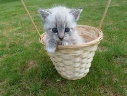 Mélodie, chat Gouttière