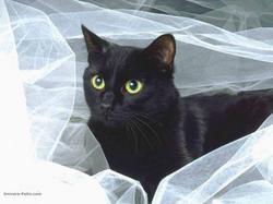 Irîs, chat Gouttière