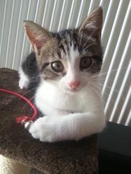 Iris , chat Gouttière