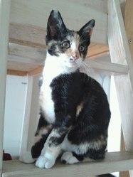 Iris, chat Gouttière