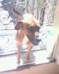 Irka, chien