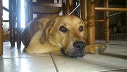 Irko, chien