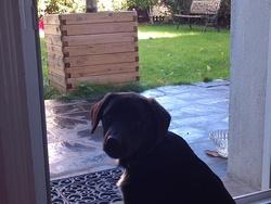 Irmate, chien