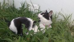 Iroise, chat Gouttière