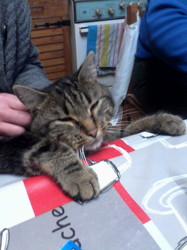 Iron, chat Gouttière