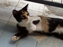 Isabel, chat Gouttière
