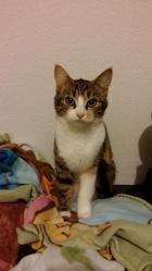 Isabelle, chat Gouttière