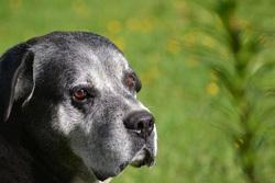 Isack, chien