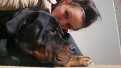 Isco, chien Rottweiler