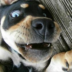 Ishka, chien