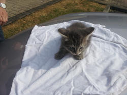 Isiris, chat Gouttière
